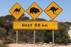 Chameau, Wombat, Kangourou