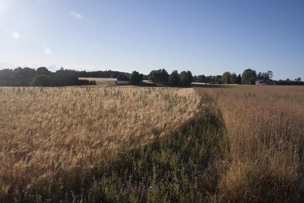 Camping sauvage au bord d une route et surtout des champs